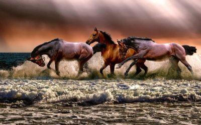 Rencontre avec un cheval…et avec ses peurs